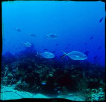 Dive and Adventure Mahahual Chinchorro