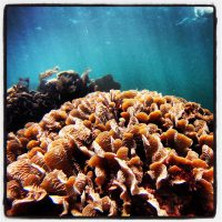 Dive and Adventure Mahahual Coralinos