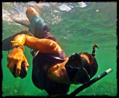 Dive and Adventure Mahahual Snorkeling